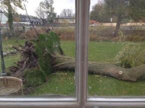 Forsikring på væltet træ